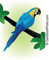 藍色, 金剛鸚鵡