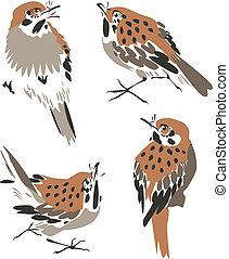 藝術插圖, 鳥