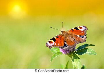 蝴蝶, 彈跳花, 天