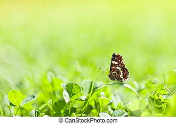 蝴蝶, 春天, 草, 綠色, 天