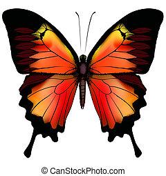 蝴蝶, 矢量, 被隔离