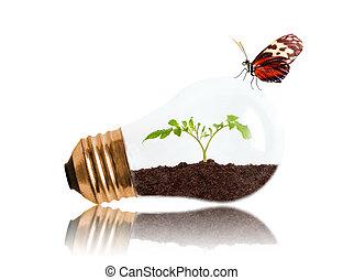 蝴蝶, 秧苗, 光, 裡面, 年輕, 土壤, 生長, 燈泡, 在外