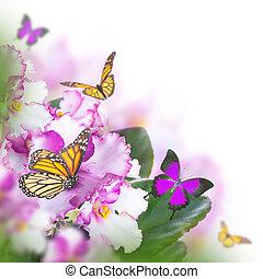 蝴蝶, 花束, 惊人, 春天, 紫羅蘭