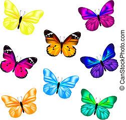 蝴蝶, 集合, 圖象