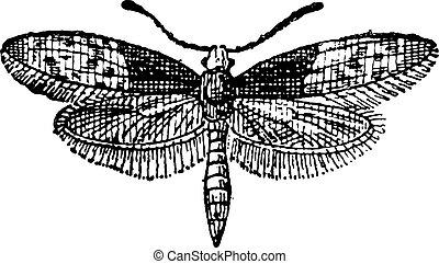 蝴蝶, 雕刻, moth, 葡萄酒, brassolis, 或者, liphyra