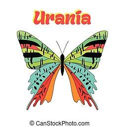 蝴蝶, urania, 矢量, 插圖