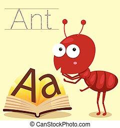 螞蟻, 說明者, 詞彙