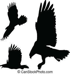 行動, 鷹, 黑色半面畫像, 矢量