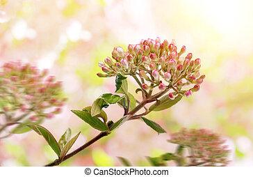 被模糊不清, 背景。, 開花, 分支, 自然