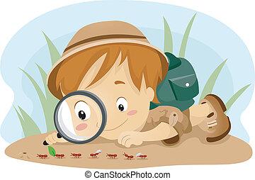 觀察, 螞蟻, 孩子