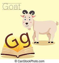 說明者, vocabular, g, goat