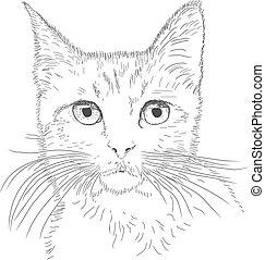 貓, 線描