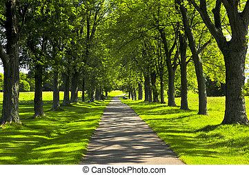 路徑, 公園, 綠色