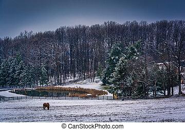 農場, 約克, 鄉村, 池塘, 馬, pennsylvania., 縣