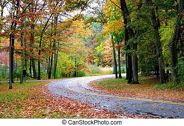 透過, 森林, 路