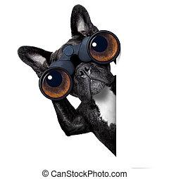透過, 狗, 雙筒望遠鏡, 看