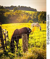 鄉村, 柵欄, pennsylvania., 約克, 領域, 縣, 馬