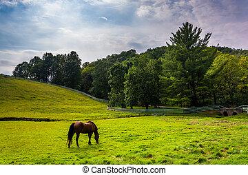 鄉村, pennsylvania., 馬, 農場, 約克, 領域, 縣