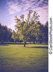 陽光普照, 城市公園, retro