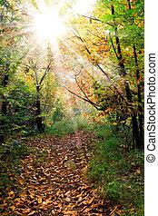 陽光普照, 葉子, 秋天