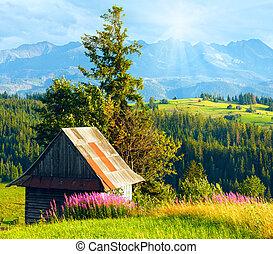 陽光, 領域, 國家, 夏天, 山, 上面