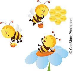 集合, 蜜蜂