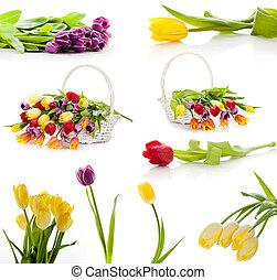 集合, 鮮艷, 鬱金香, 被隔离, flowers., 背景, 春天, 新鮮, 白色