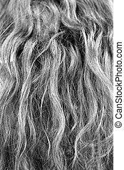 頭髮, 灰色