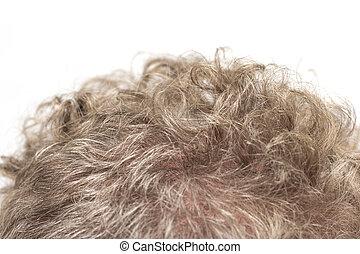 頭髮, 灰色, man., 背景, 宏