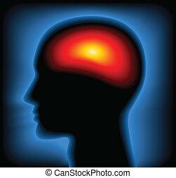 頭, 圖像, /, 熱, 矢量, x光