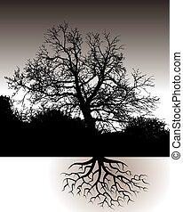 風景, 根, 樹