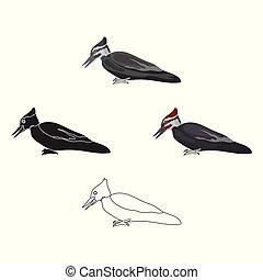 風格, 股票, 符號, 卡通, 黑色, 啄木鳥, 被隔离, 鳥, 圖象, 矢量, 背景。, illustration., 白色