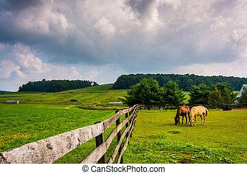 馬, 云霧, 柵欄, 農場, 縣, 在上方, pennsylvania., 黑暗, 約克, 鄉村
