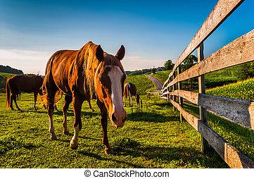 馬, 柵欄, 農場, 縣, pennsylvania., 領域, 約克