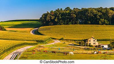 馬, 農場, 國家, pennsylvania., 約克, 縣, 鄉村的道路, 小山