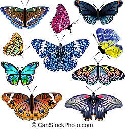 鮮艷, butterflies., 現實, 被隔离, 集合