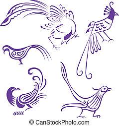 鳥, 插圖