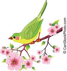 鳥, 春天