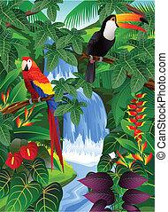 鳥, 熱帶