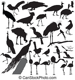 鳥, 矢量, 黑色半面畫像, 集合
