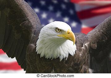 鷹, 美國旗
