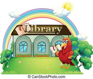 鸚鵡, 閱讀, 紅色, 圖書館, 前面