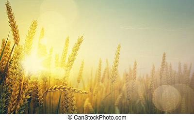黃金, 藝術, 陽光普照, 領域, 小麥, 天