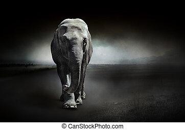黑的背景, 大象