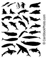 黑色半面畫像, 矢量, mammals., 海, 插圖