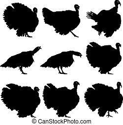黑色半面畫像, 矢量, turkeys., illustration.
