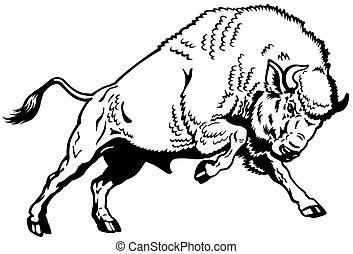 黑色, 歐洲, 北美野牛, 白色