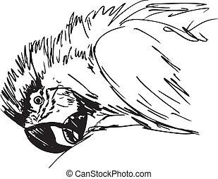 bird., 略述, 矢量, 金剛鸚鵡, 插圖