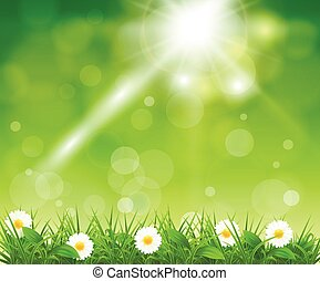 boke, 草, 綠色的背景