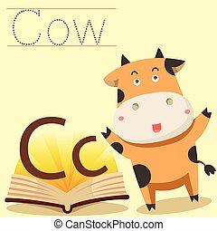 c, 說明者, 詞彙, 母牛